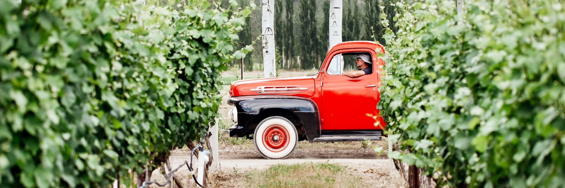 red truck in a vineyard