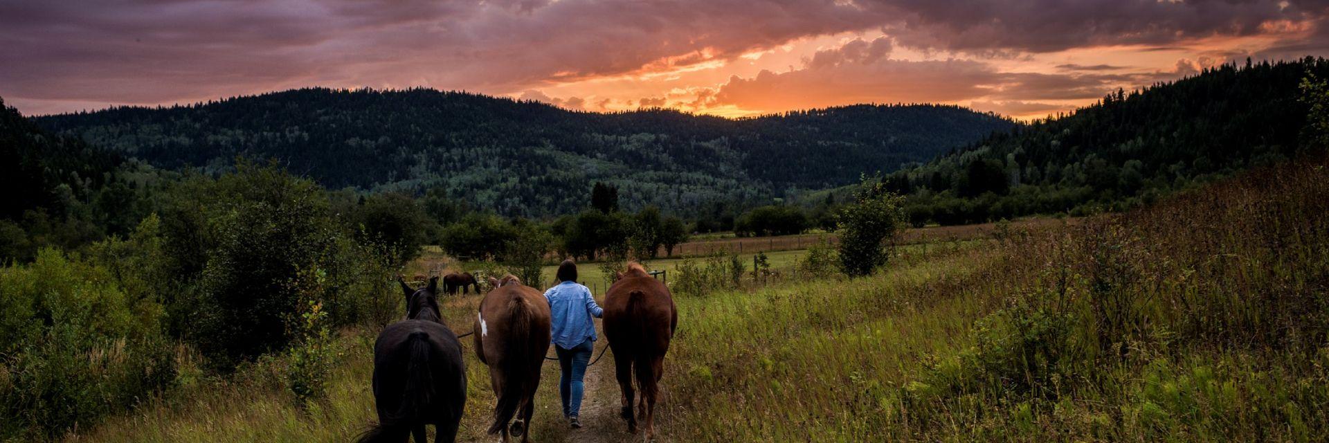 sunset horsback ride at Kayanara guest ranch, Eagle Creek, british columbia.